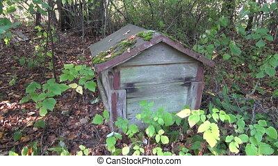 Old beehive in derelict garden - Old beehive in derelict...