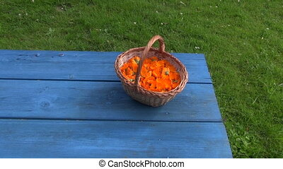 Freshly picked calendula marigold prepared for drying in...