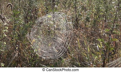Spider web in grass on sunny morning covered with dew