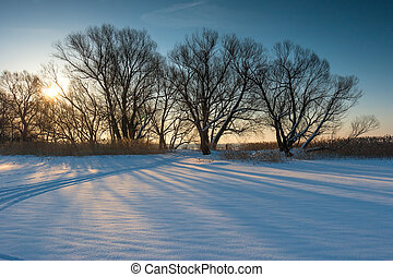a group of bare trees in a field at sunset winter day