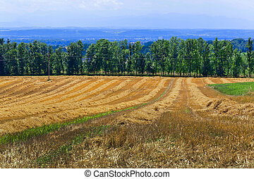 cornfield after harvest - a mowed cornfield of a farmer in...