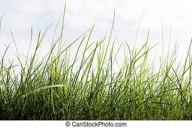 Grass and sky for your environment project