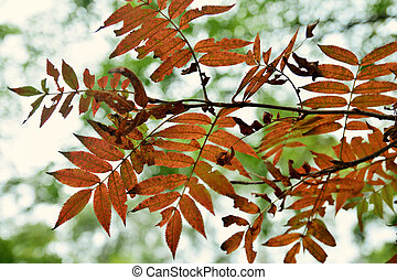 Fall, autumn, leaves background