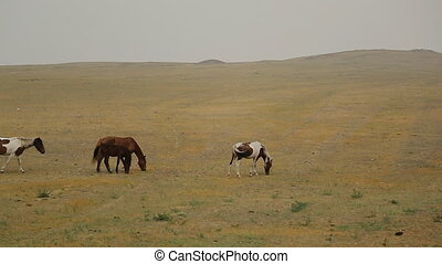 Wild Horses Graze different breeds in the steppe field alone, without human control, without fences and corrals. Pure landscape far away from civilization