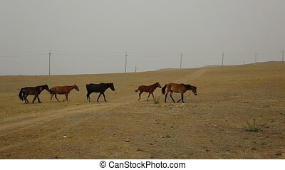 Wild Horses Graze different breeds in the steppe field alone, without human control, without fences and corrals. The scenery along the first signs of civilization