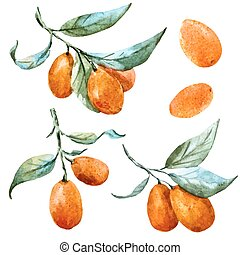 Watercolor vector tangerine - Beautiful vector image with...