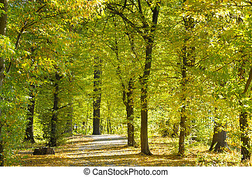 beautiful autumn park with soft sunlight