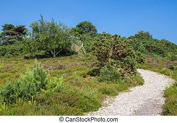 Heathland at Arne in Dorset - Gravel Path Across Heathland...
