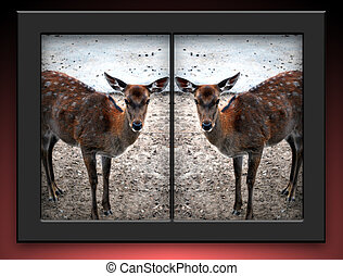 Cloned Deer - Whitetailed cloned female deers in black...