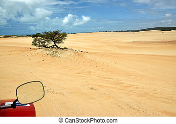 Dune seen from the buggy mirror