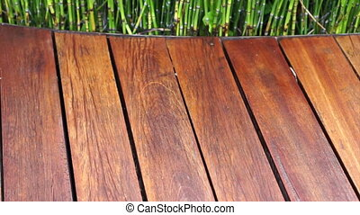 wooden texture and green plant - Video of wooden plank seat...