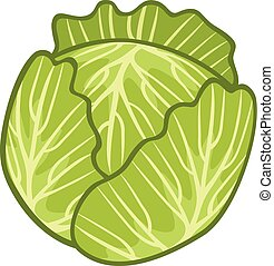 green cabbage illustration