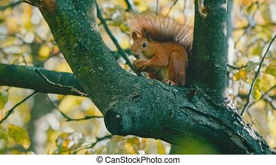 Squirrel on tree eating a nut