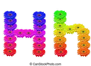 Hh - Daisy Upper and Lower Case H isolated with clipping...