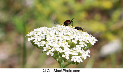 Insects on a flower. - Insects, butterflies on a white...