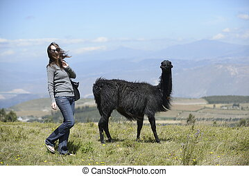 Llama and a woman - A woman is approaching a llama