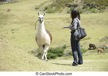 Llama and a woman - A woman is approaching a llama.