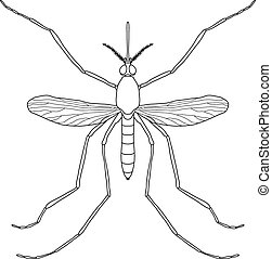 Insect. a realistic mosquito. Culex pipiens Mosquito silhouette. Mosquito isolated  on white background.