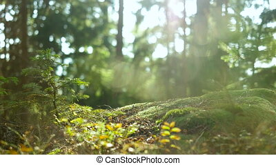 Calm Tranquil Forest Scene - Calm Tranquil Scene from the...