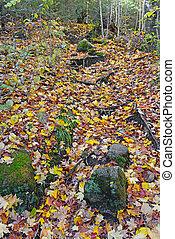 Autumn colors in the Adirondacks - Fall foliage, Autumn...