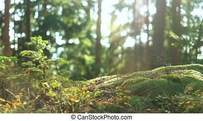Calm Tranquil Forest Scene - A down-low look at the tranquil...
