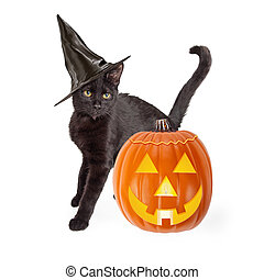 Halloween Black Cat With Carved Pumpkin - Black short haired...