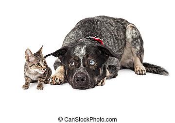 Kitten Annoying Patient Dog - Big patient shepherd...