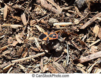 red bugs - The image of red bugs in a native habitat