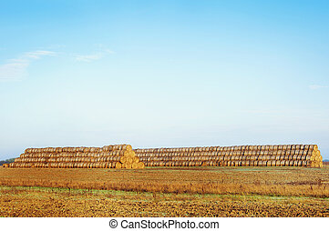 Haystacks on the field Rural landscape - Haystacks on the...