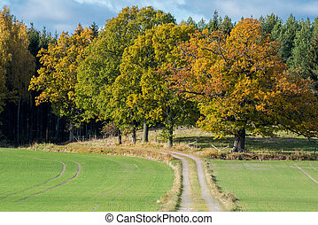 Autumn in Sweden - Autumn in the countryside of Vikbolandet...