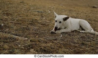 Healthy Dog Resting white color in the wild, Looking bone...