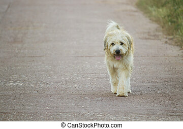 Dog is walking alone