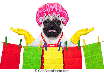 dog doing household chores - pug dog doing household chores...