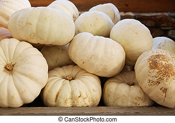 Little White Pumpkins - Heap of small white pumpkins at...