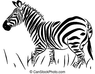 Full Body Zebra Vector - Full Body Detailed Zebra isolated...