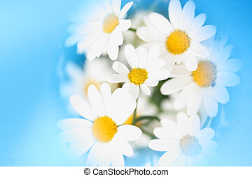 Marguerites - marguerites with light blue frame