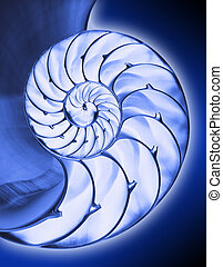 Blue nautilus2,isolated - Blue inside half of chambered...