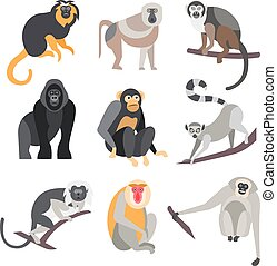 Set of Apes and Monkeys Vector Illustration - Collection of...