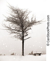 Winter scene with isolated tree