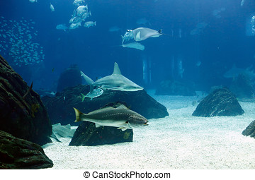 Sea aquarium shark - Lisboa, Portugal - March 3, 2014: Shark...