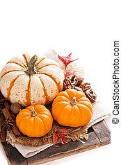 Pumpkin still life isolated on white