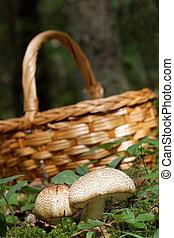 Mushroom basket and Agaricus augustus mushroom and moss -...