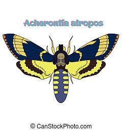 Butterfly Acherontia atropos vector illustration - Butterfly...