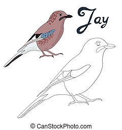 Educational game coloring book jay bird vector - Educational...