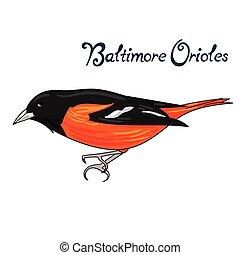 Bird baltimore orioles vector illustration - Bird baltimore...