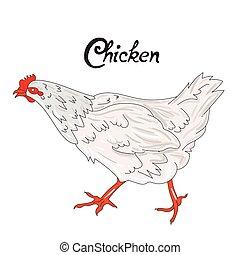 Bird chicken hen vector illustration