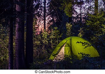 Camping in a Forest. Late Evening on a Camp Site. Green...