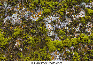 rock covered with moss texture - rock covered with algae...