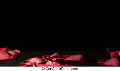 Rose petals falling on black background Slow motion -...