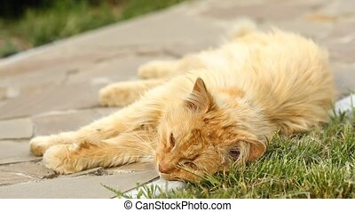 Red cat relaxing